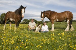 Family Portrait, Horses